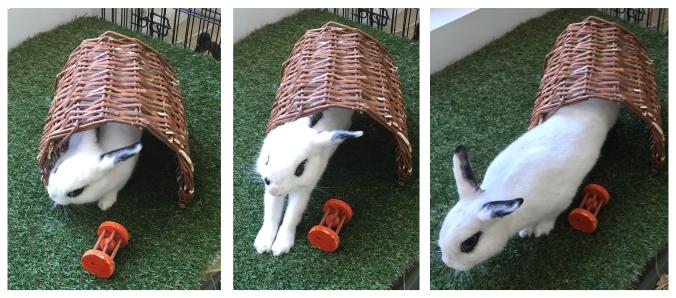 Bunny JPG.jpg
